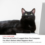 Clickbait Hype Example Cat on the Internet